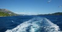 Mewy płynące za łodzią