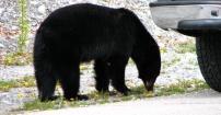 Narodowy Park Jasper