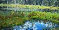 Jezioro Torfowe