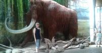 Focia z mamutem