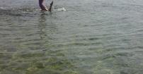 Syrenka w Zatoce Puckiej